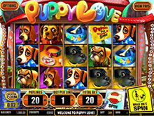 free-puppy-love-slot-machine